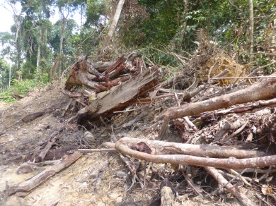 timber extraction for clearing the 30,000 ha for the new harbour